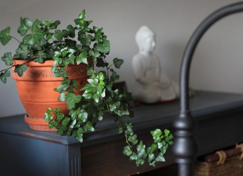 Met deze tip hoef je zelf je planten niet meer te verzorgen
