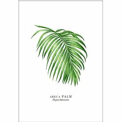Palm Leaf (21x29,7cm)