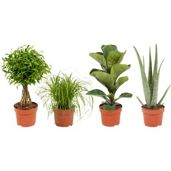 4x Easy-care planten combi Ø12cm