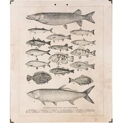 Wandkaart vissen 50x1x60 cm