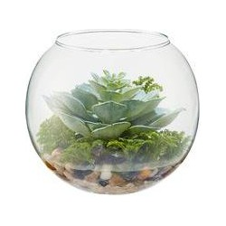 Linea Cabbage succulent in bowl