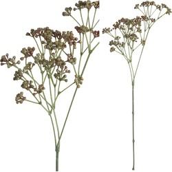 Berry Plant - 24.0 x 21.0 x 64.0 cm