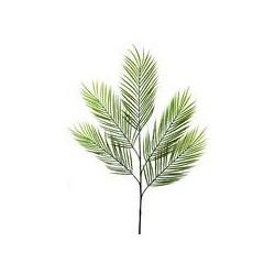 Linea Arece palm branch