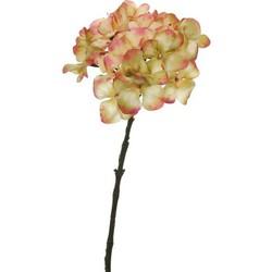 Pure Hydrangea Pink