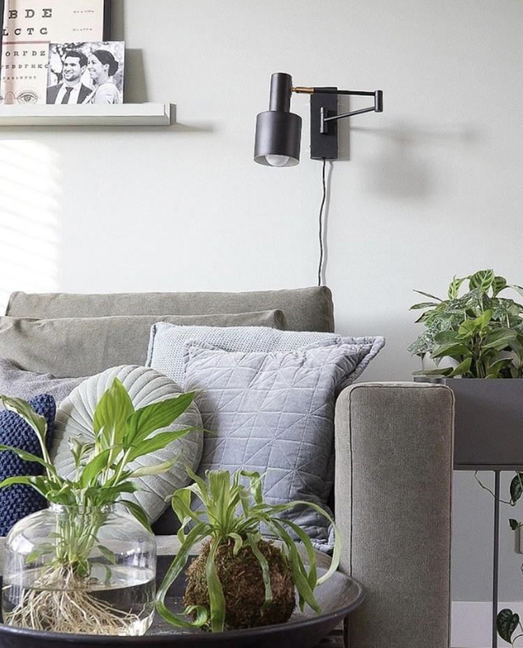 woonkamer plant verzorgen