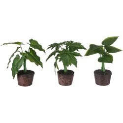 J-Line Kunstplant Philodendron set van 3 25cm
